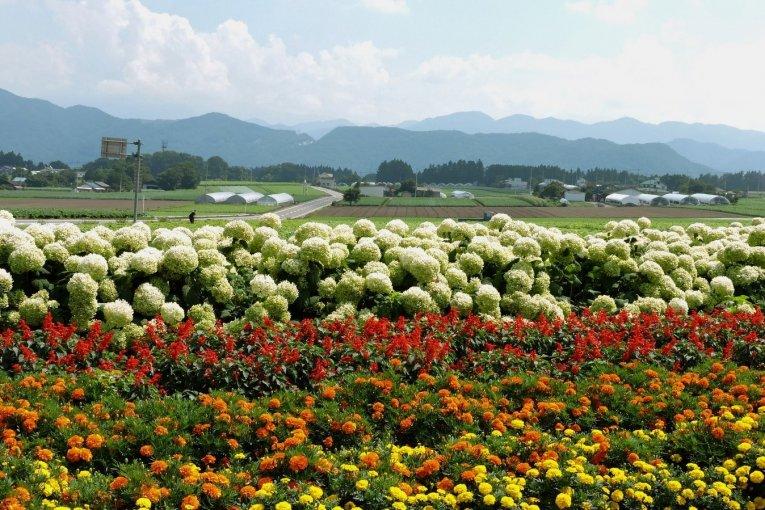 """""""Road Trip"""" Musim Panas di Gunma"""