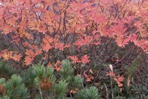 Des feuilles d'un rouge vif