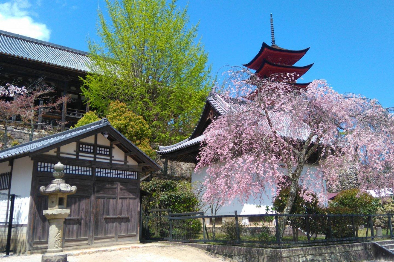 Miyajima\'s magic in nature and history