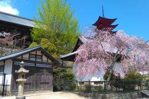 Miyajima's magic in nature and history
