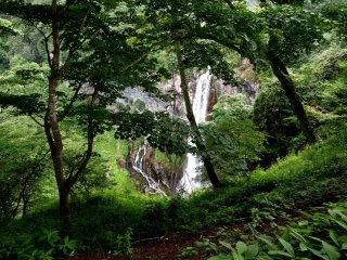 Waterfall glimpsed through the trees