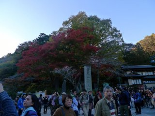 Colors starting to change. Photo taken near the Chair lift and Cable car entrance