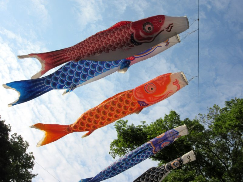 Carp (koi) decorations for Boy's Day celebrated on May 5