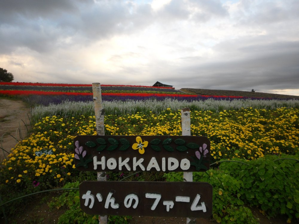 Kanno Farm sign against the field of flowers
