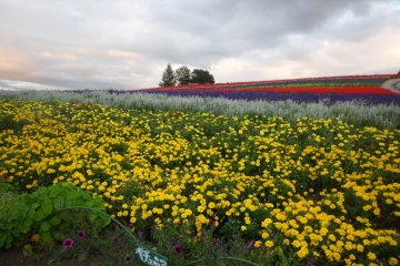 The Flower Fields of Biei