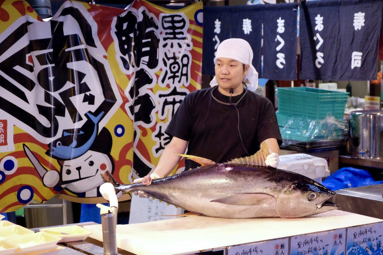Cá ngừ vây xanh. Mẻ cá được đánh bắt trong ngày ở Kuroshio