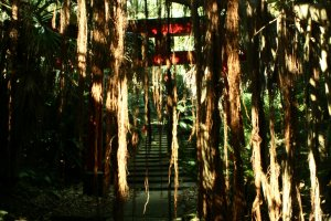 Banyan trees are taking it back. The Shrine at Sata