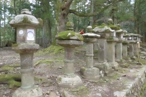 The path through the woods is flanked on either side with lanterns.
