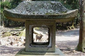 Deer can be found frolicking among the lanterns.