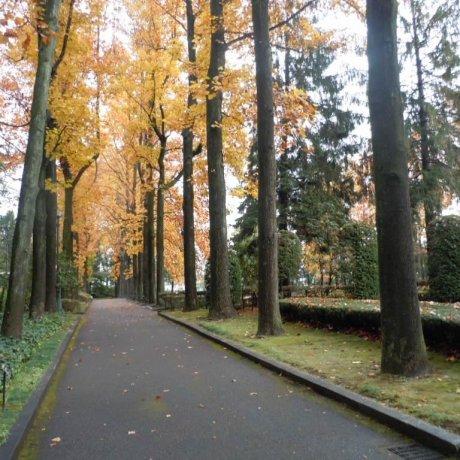Tochigi Central Park