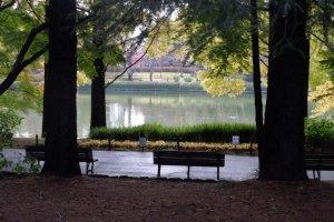 Large pond framed by trees