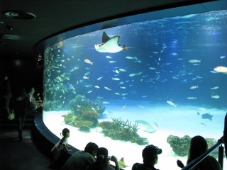 Aquarium of the Sunshine City, Ikebukuro