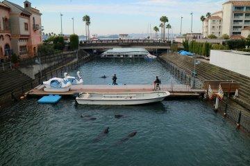 Следите за дельфинами!