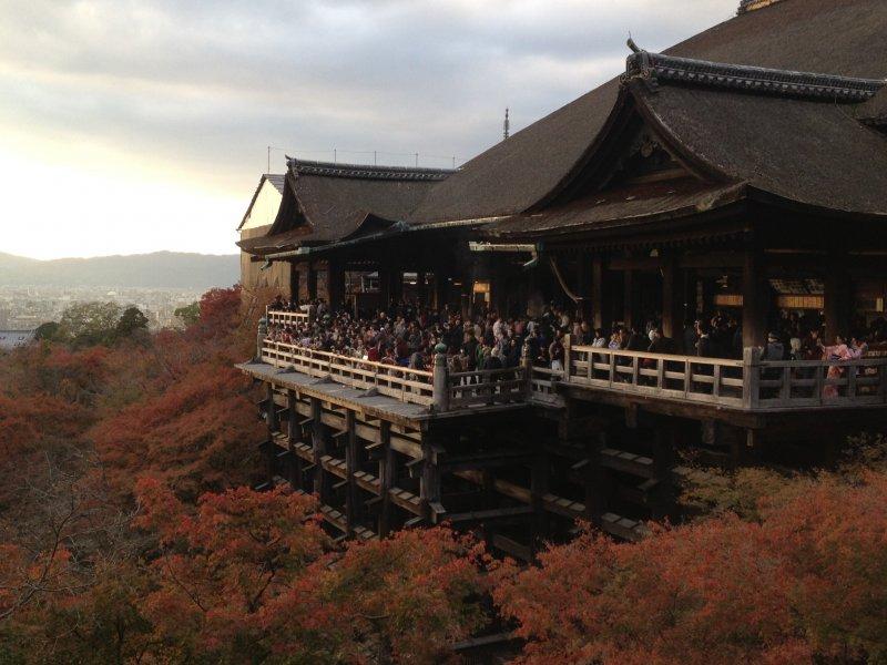 Best scene I've seen in Kyoto. And maybe in Japan.