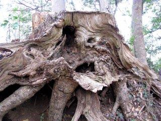 Picturesque stump
