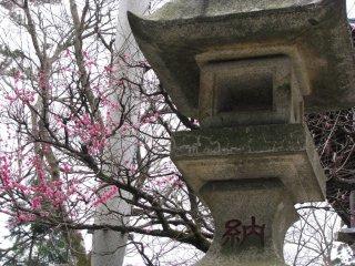 Stone old lantern and sakura