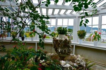 南国の花が咲く温室