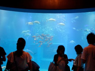 The main tank at the Kaiyukan Aquarium