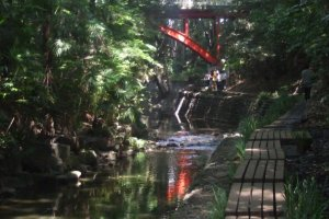 Convenient wooden walkway through the forest