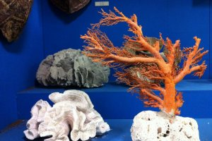 Coral and seashells in the Kashima Museum