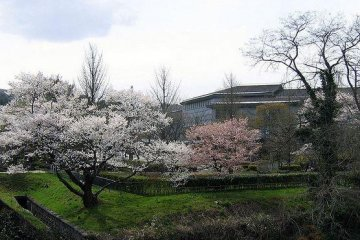 <p>The landscape around the center comes alive during the spring.</p>
