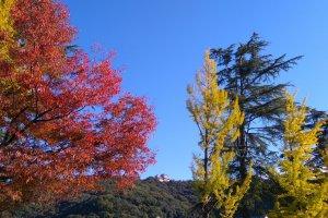 Matsuyama Castle from afar