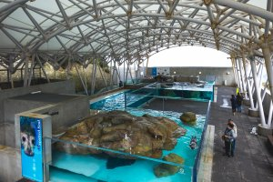 A view over the seal, sea lion, and penguin exhibits