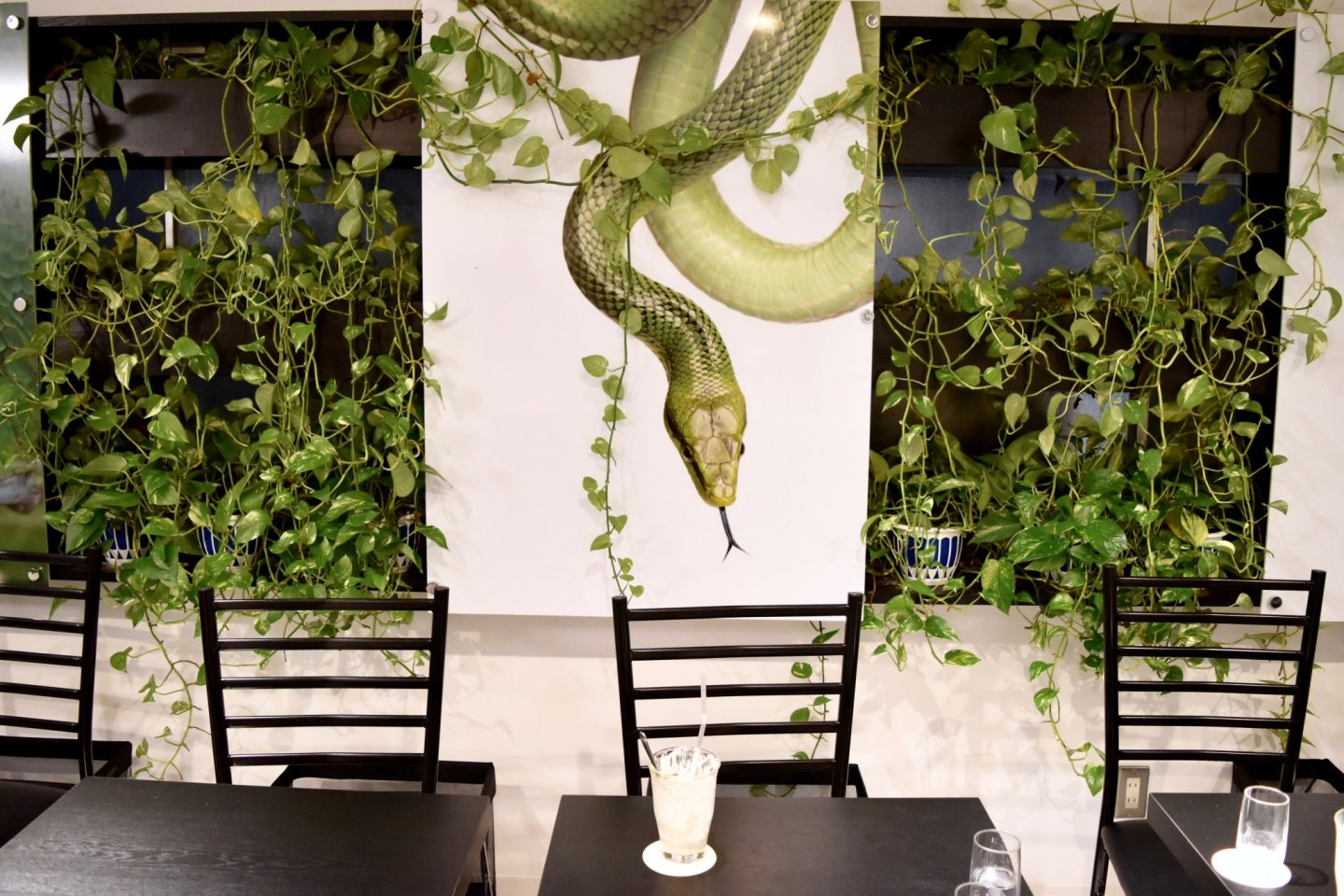 Snake vines and snakes!