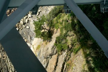 Pine tree clinging precariously to the rocky cliff below the bridge