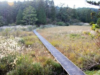 The boardwalks are wide, well maintained, and make navigating the park very easy