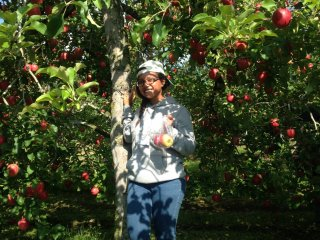 Joy of apple-picking under the cool shade