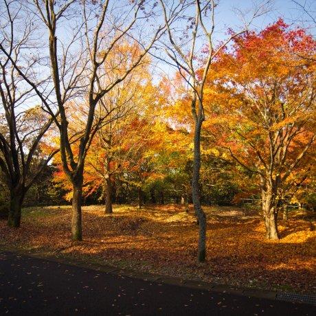 Cycling Course at Moricoro Park