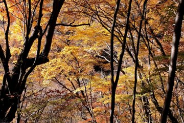 Autumn Hiking in Nishizawa Valley