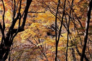 Autumn Hiking in Nishizawa Valley