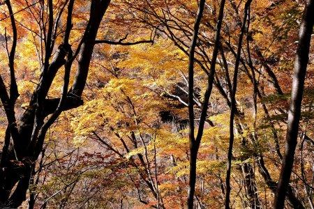 Mendaki Lembah Nishizawa