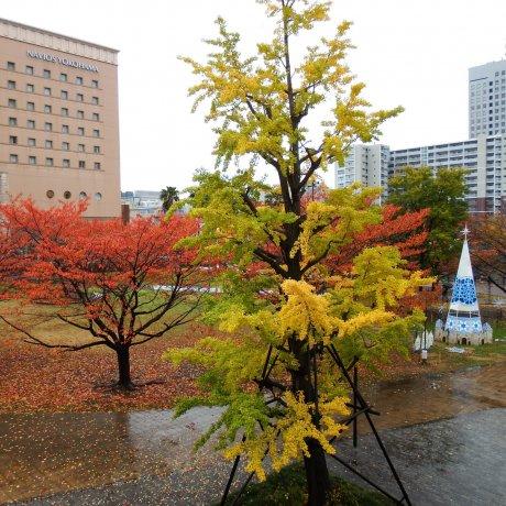 Musim Gugur di Minato Mirai