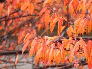 가을의 많은 색들도 보이네요