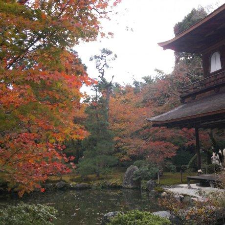 Ginkaku-ji in Autumn