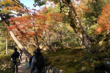 Ah, this is it! Ginkaku-ji's full autumn foliage viewing