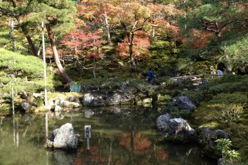 The pond and the trees make a great combination in this frame