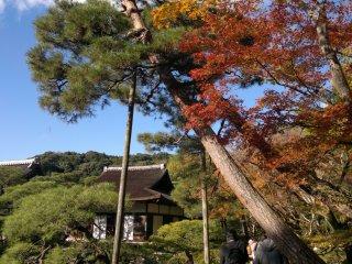 На фоне голубого неба осенние виды Гинкаку-дзи будут выглядеть еще ярче