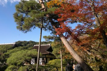 Mixed with the sky's blue, the views in Ginkaku-ji during autumn will be even richer in color