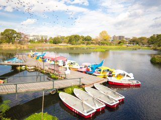 Boats for rent to paddle around on the lake
