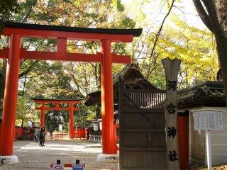 ประตูโทริสีแดงสดตัดกับสีเหลืองของใบกิงโกะได้อย่างงดงามา