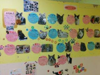 Cat profile wall