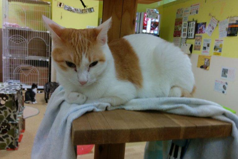 Городское кошачье кафе Фукусимы