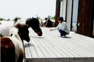 Say hi to the horses and go for some horseriding in Kagoshima's Kirishima Art Ranch