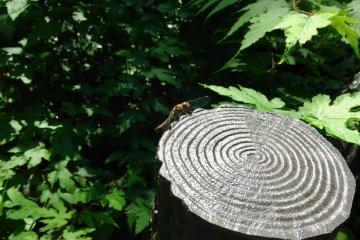 Local dragonfly sunbathing