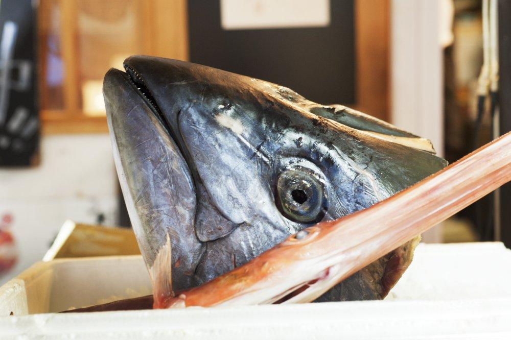 The tuna auction starts at 5:30am