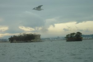 Matsushima island displaying sedimentary layering (bedding) visible with a seagull in flight.